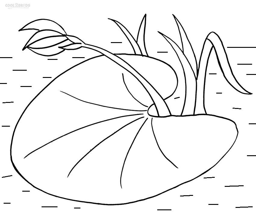 850x708 Printable Lily Pad Coloring Pages For Kids Cool2bkids Mural