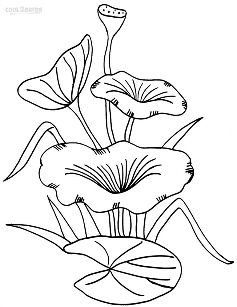 791x1024 Drawing Of A Lily Pad Printable Lily Pad Coloring Pages For Kids