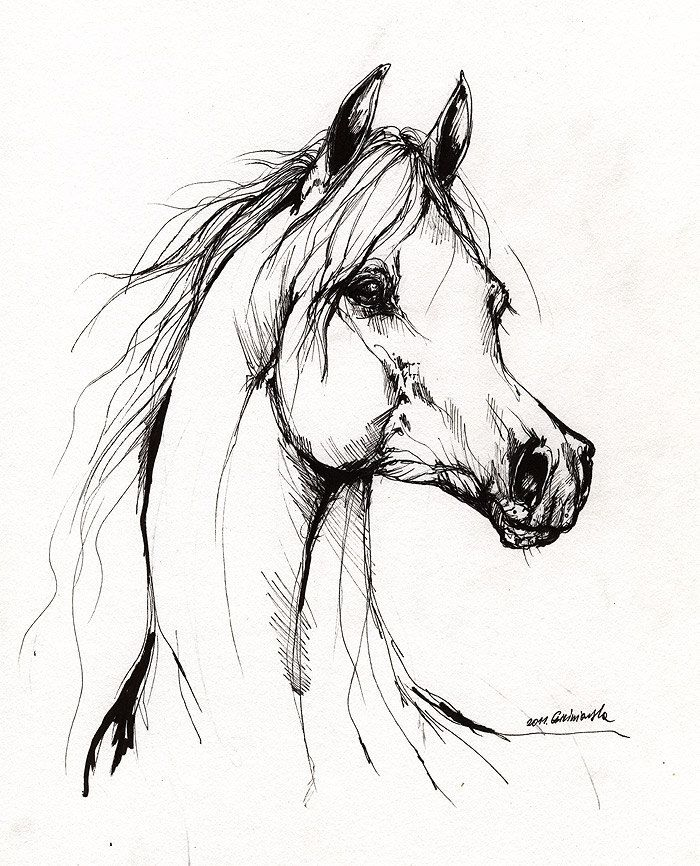 Paint Horse Drawing