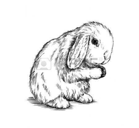 450x413 Color Brush Painting Ink Draw Isolated Rabbit Illustration Stock