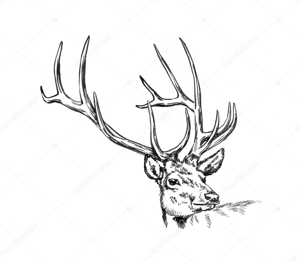 1024x889 Brush Painting Ink Draw Deer Illustration Stock Photo