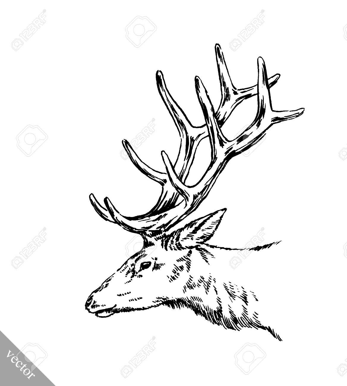 1168x1300 Black And White Brush Painting Vector Ink Draw Isolated Deer