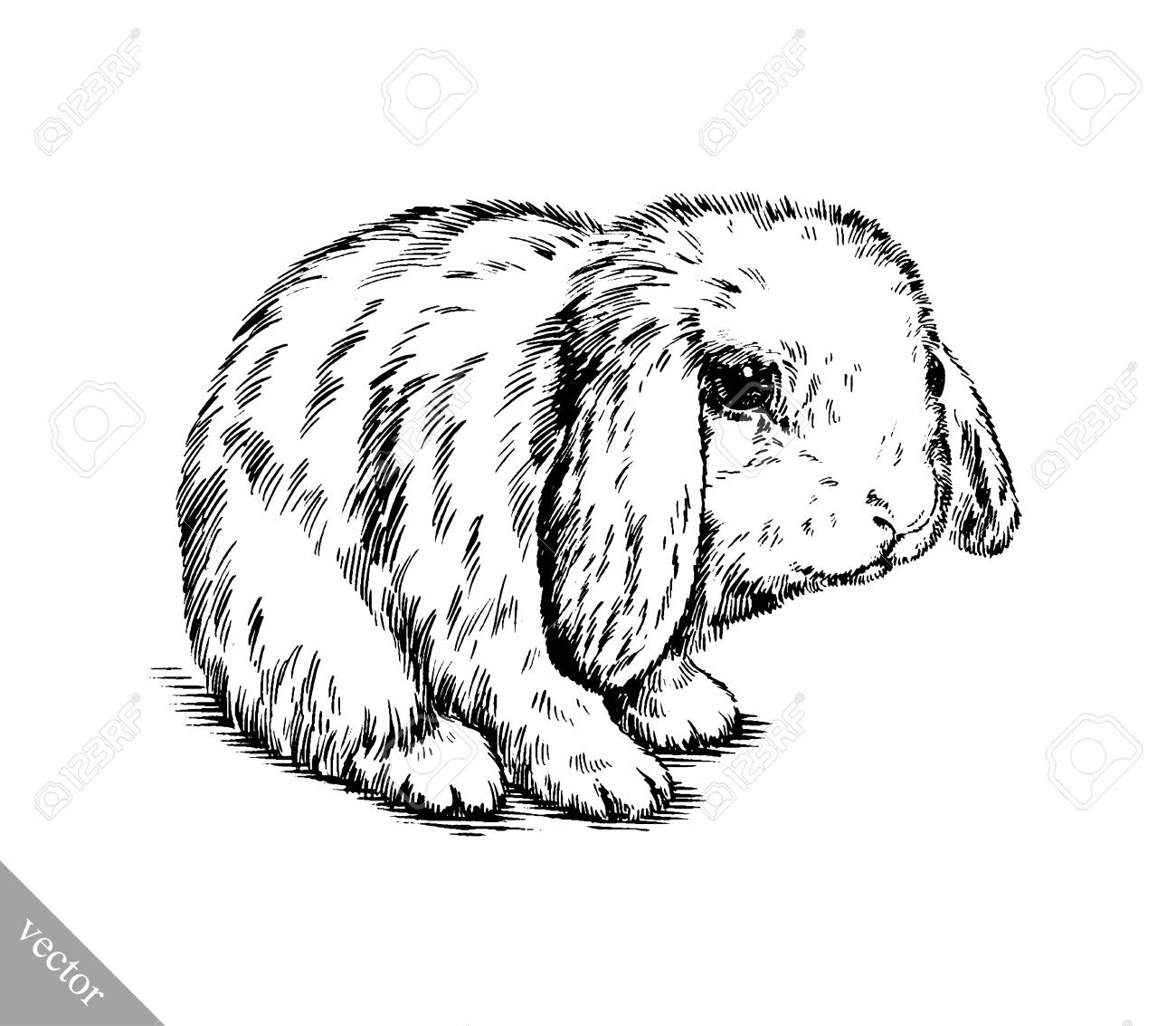 1300x1133 Black And White Vector Brush Painting Ink Draw Isolated Rabbit