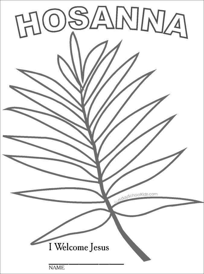 Palm Branch Drawing