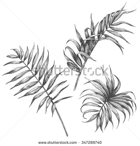 450x470 Hand Drawn Branches And Leaves Of Tropical Plants. Palm Leaves