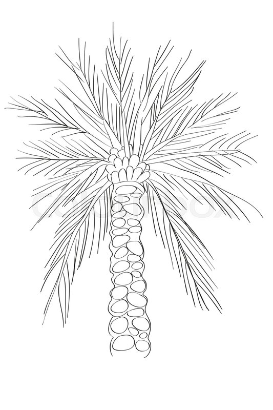 533x800 Hand Drawn Illustration Of A Palm Tree, Doodle Isolated On White