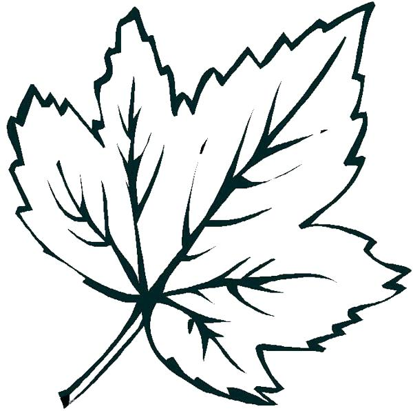 600x596 Leaf Coloring Pages Printable Palm Leaves Shapes Kids Drawing