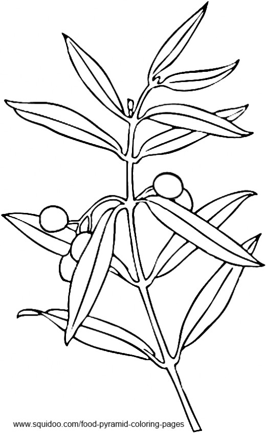 520x844 Olive Tree Coloring Page Printable Coloring Pages Christmas Tree