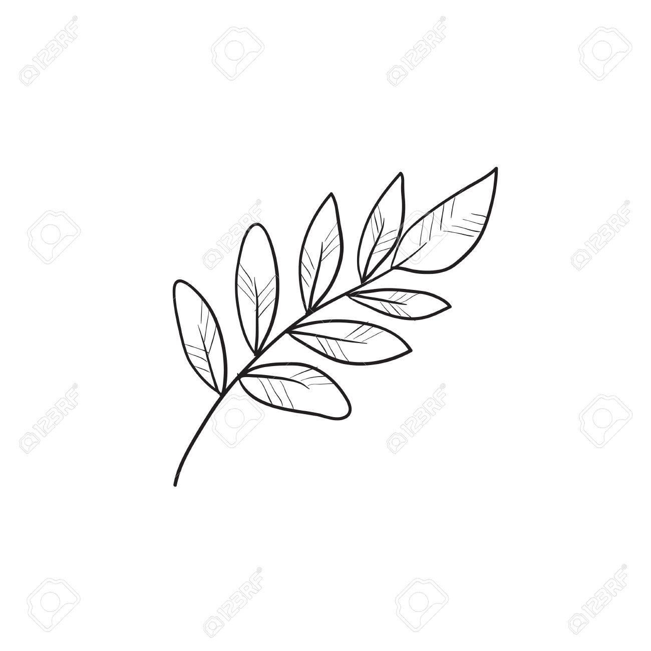 1300x1300 Palm Branch Vector Sketch Icon Isolated On Background. Hand Drawn