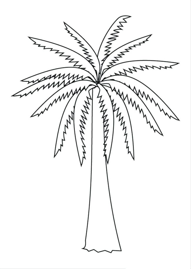 650x918 Palm Tree Coloring Pages Thick Palm Tree Coloring Page Palm Tree