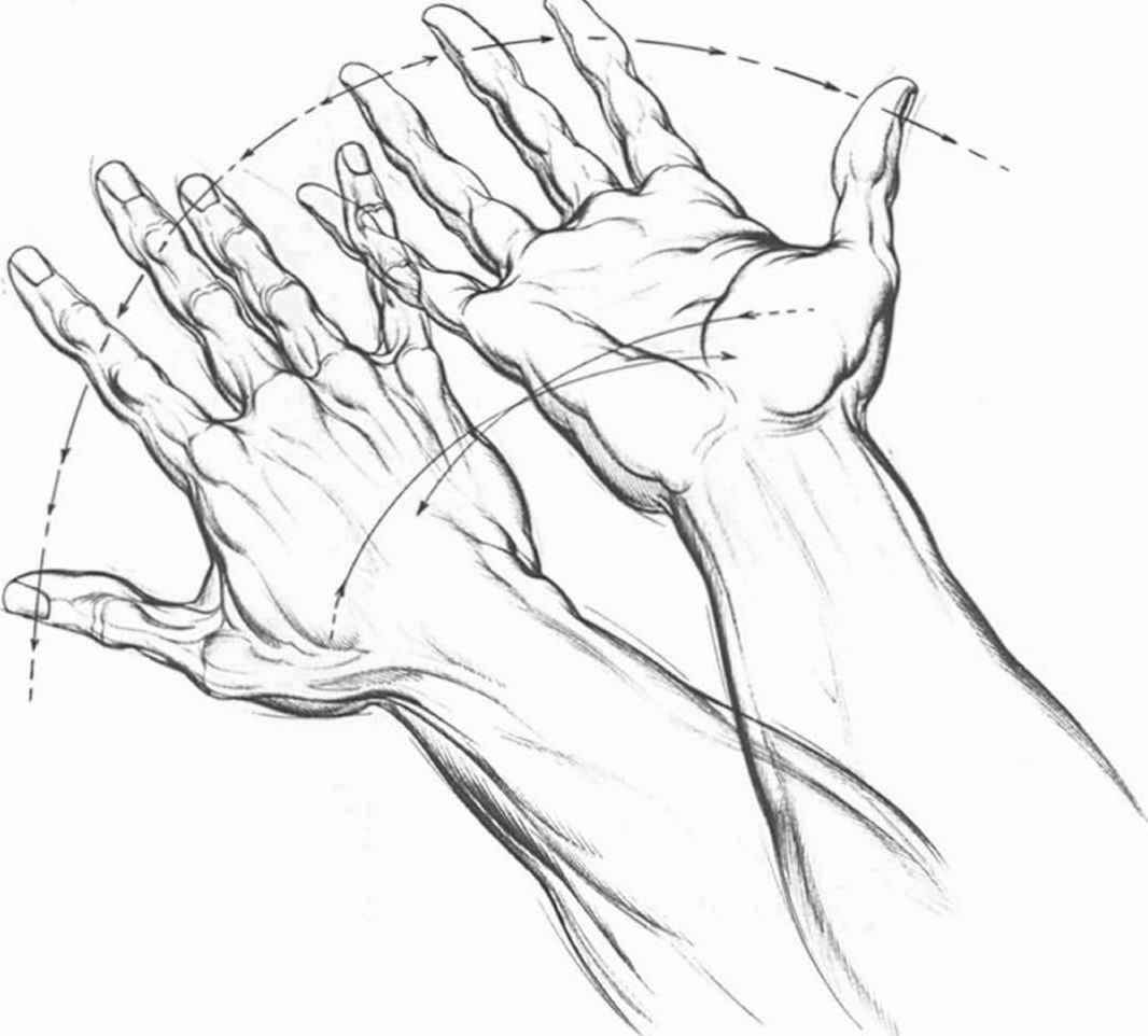1066x962 Hand Palm Drawing