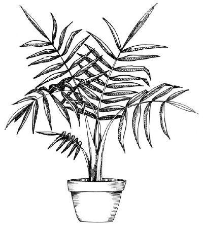 400x445 How To Draw A Palm Howstuffworks