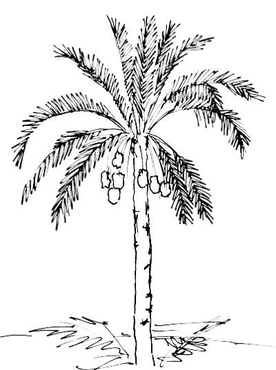 400x535 How To Draw A Date Palm Tree