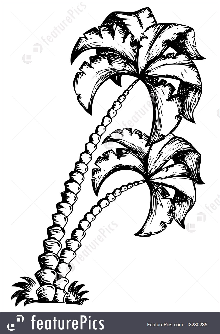 920x1392 Illustration Of Palm Tree Theme Drawing 1