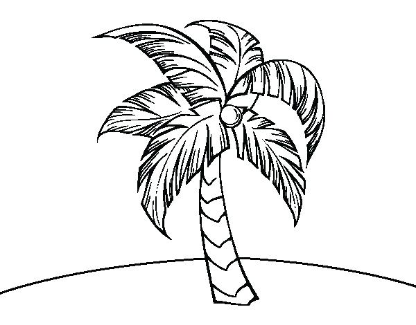 600x470 Palm Tree Coloring Pages Date Palm Tree Coloring Pages Line