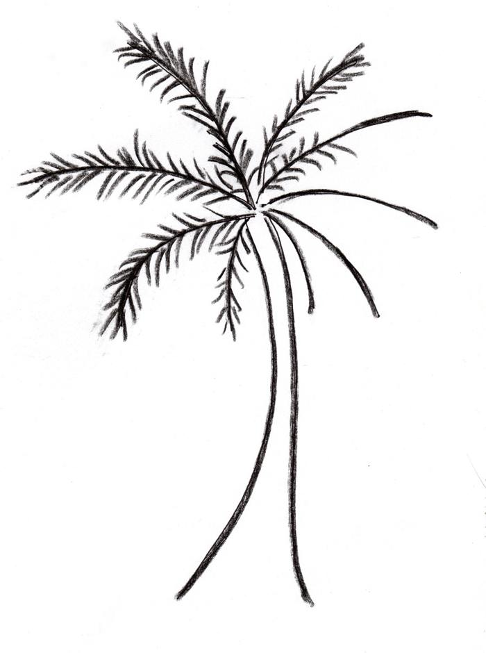 700x940 Palm Tree Drawings Clip Art Pictures Reference