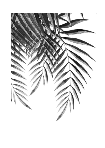 363x510 Palm Fronds