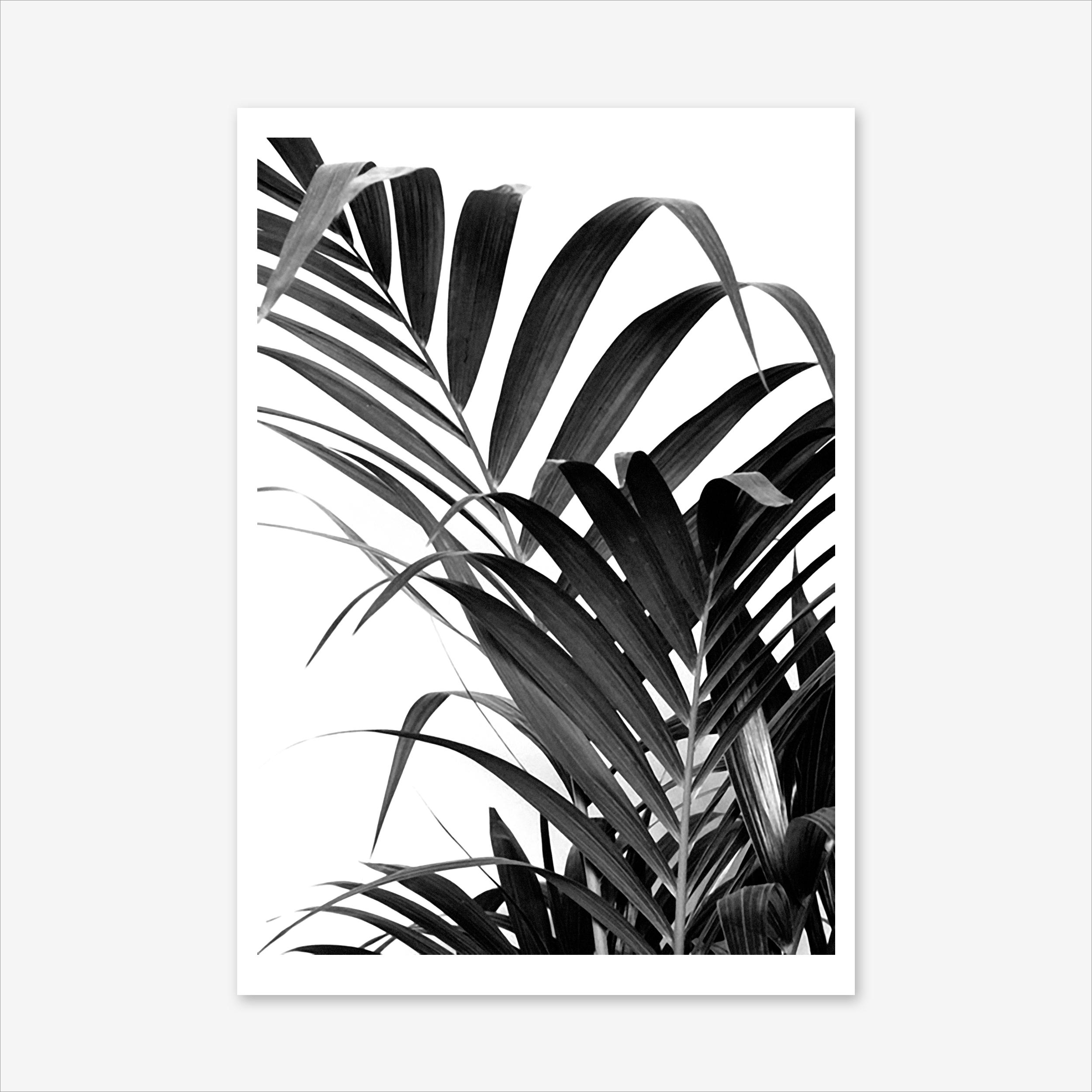 2500x2500 Palm Leaf 02 Art Print By Honeymoon Hotel