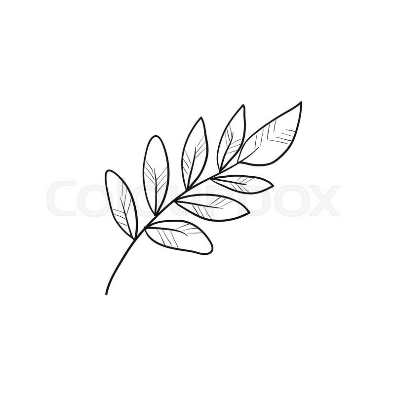 800x800 Palm Branch Vector Sketch Icon Isolated On Background. Hand Drawn