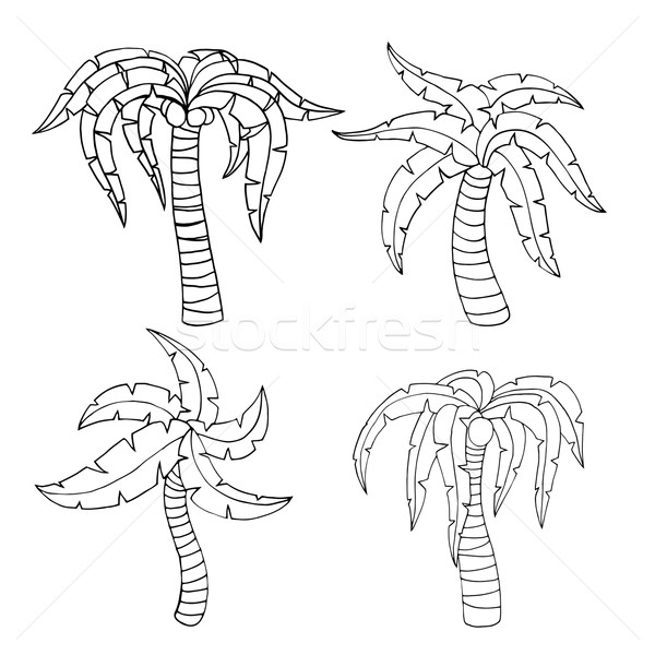 600x600 Palm Frond Stock Vectors, Illustrations And Cliparts Stockfresh
