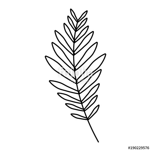 500x500 Branch Palm Leaves Frond Natural Vector Illustration Outline