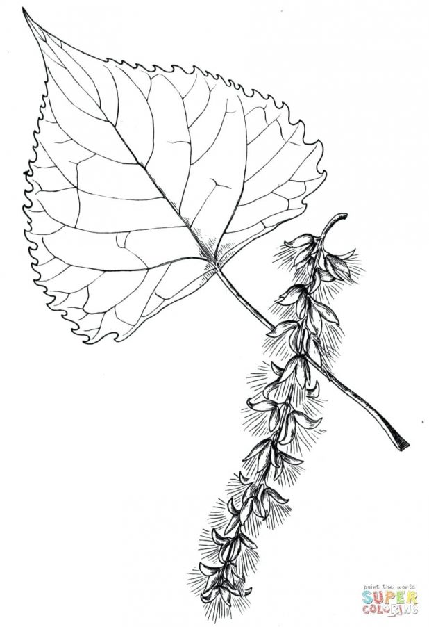 Palm Leaf Drawing