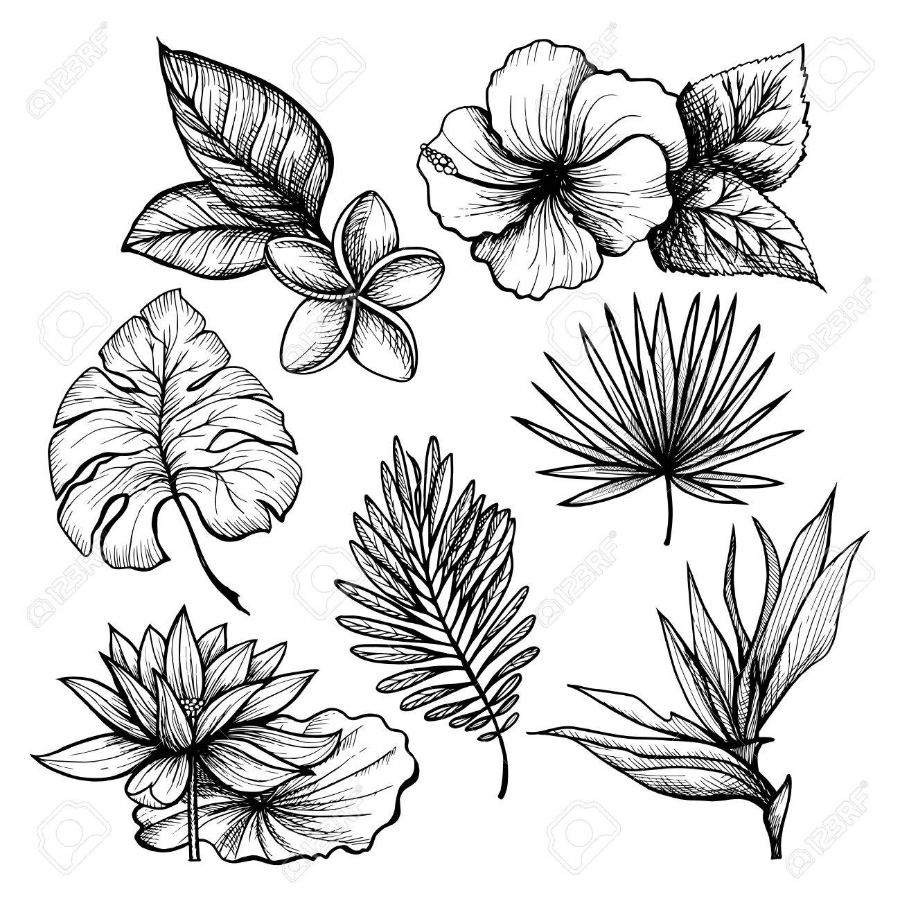 1299x1300 Black And White Hand Drawn Tropical Leaves And Flowers Set