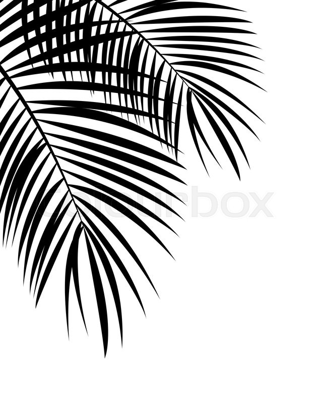 631x800 Palm Leaf Vector Background Isolated Illustration Eps10 Stock