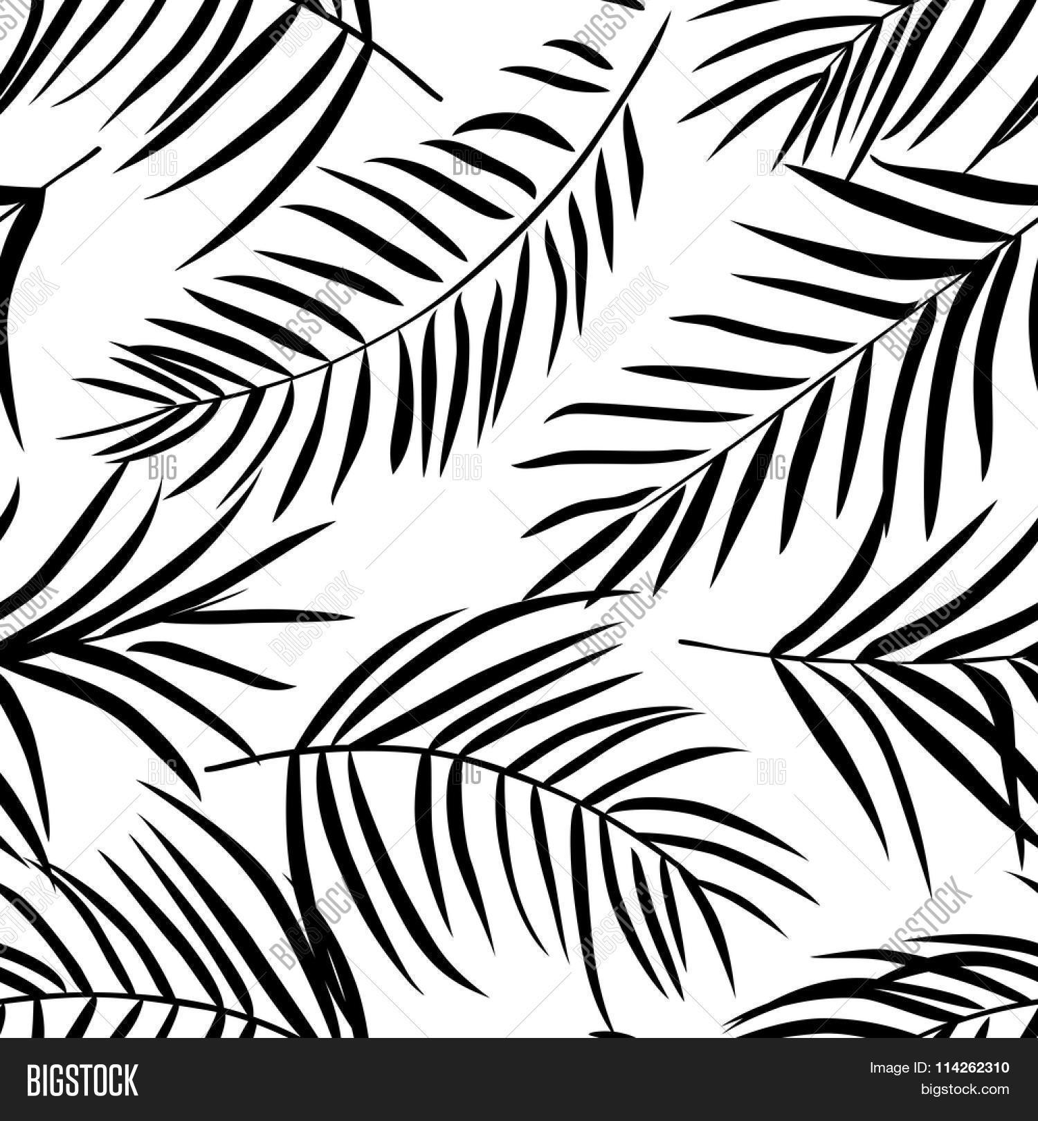 1500x1620 Tropical Palm Leaves Black White. Vector Amp Photo Bigstock
