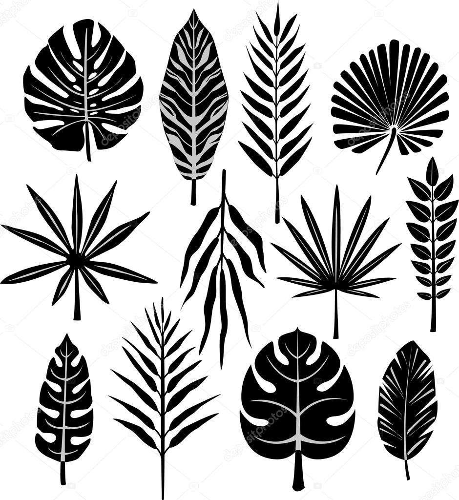 940x1024 Tropical Leaf Stock Vector Wikki33