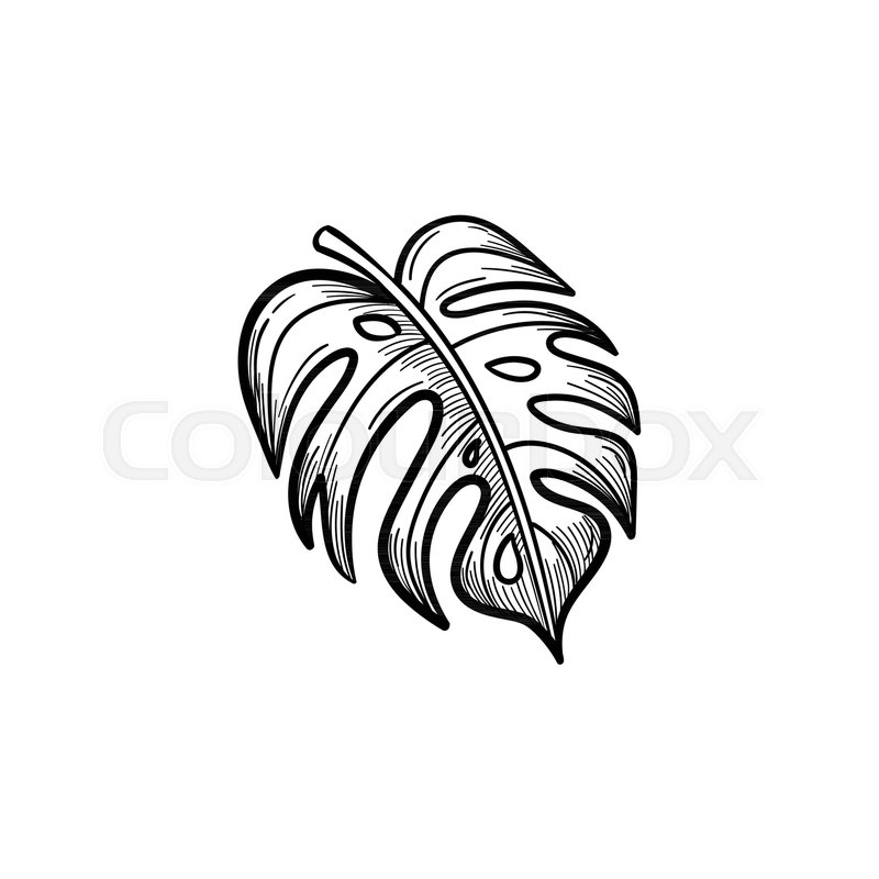 800x800 Vector Hand Drawn Palm Leaf Outline Doodle Icon. Palm Leaf Sketch