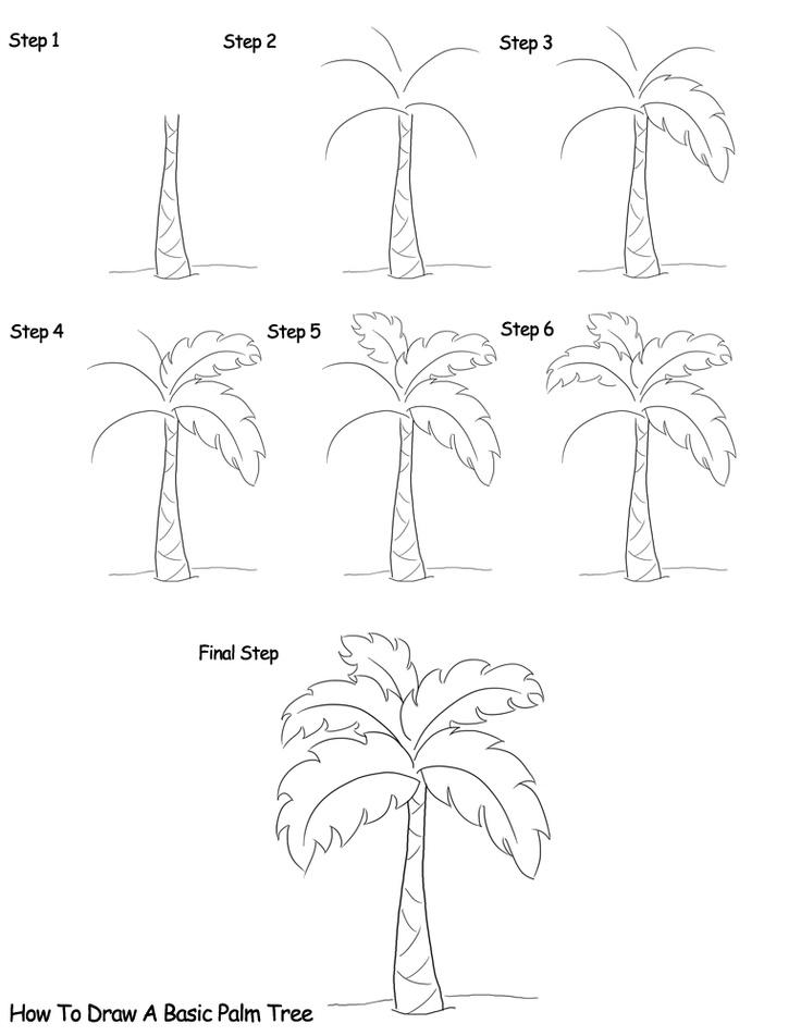 736x952 Drawn Palm Tree Step By Step