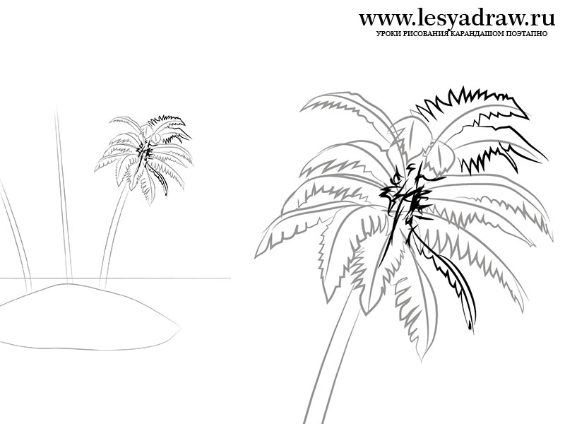 800x600 How To Draw A Palm Tree On The Island