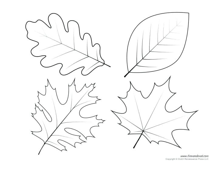 728x563 Leaf Stencils Printable In Various Shapes And Sizes That Include