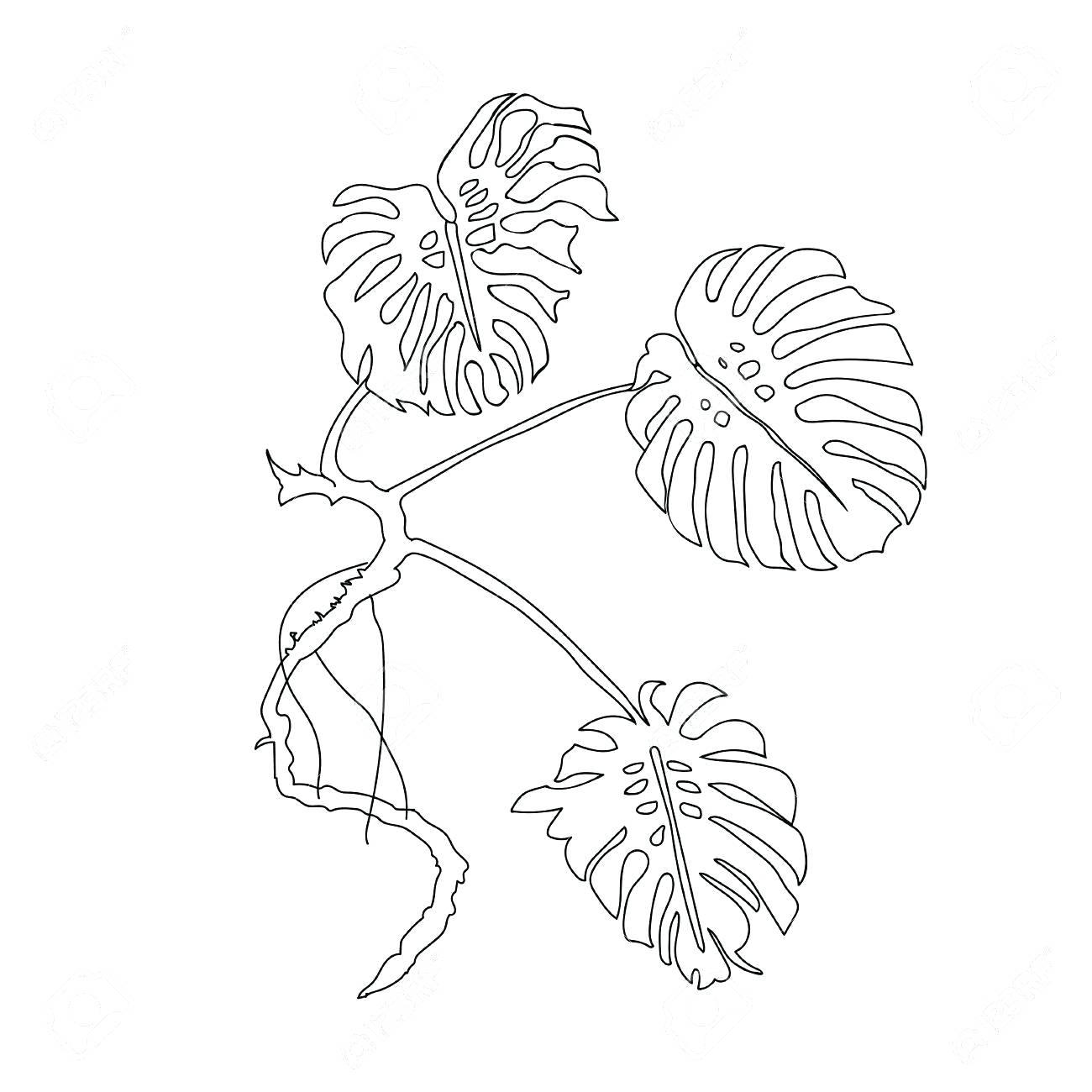 1300x1300 Palm Leaf Outline 48 Captivating Images Graphic Leaf Shape Outline