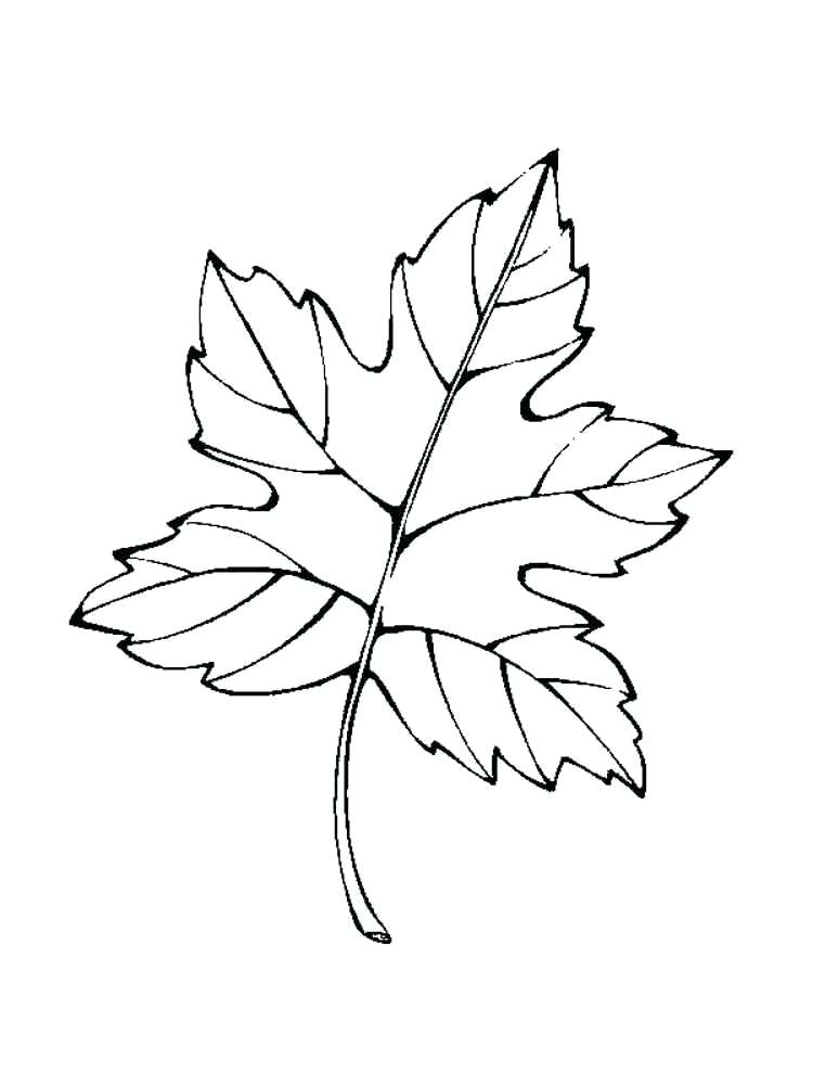 750x1000 Autumn Coloring Pages For Kindergarten Palm Leaves Branch Page