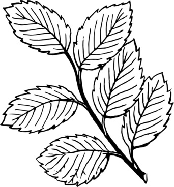342x368 Palm Leaves Clip Art Free Vector Download (214,468 Free Vector