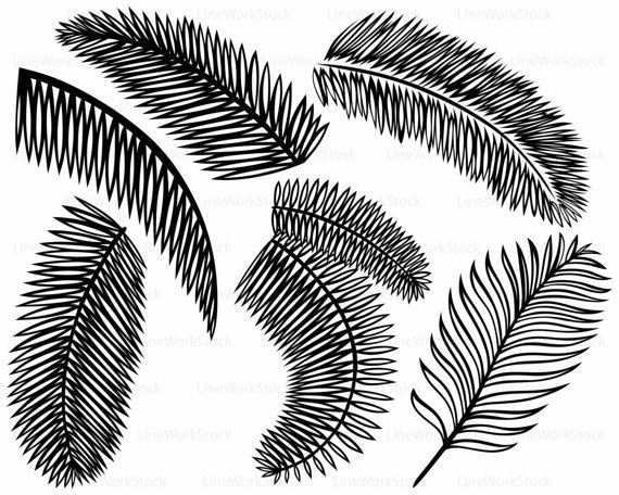 570x456 Palm Leaves Svg,palm Leaves Clipart,palm Leaves Svg,palm