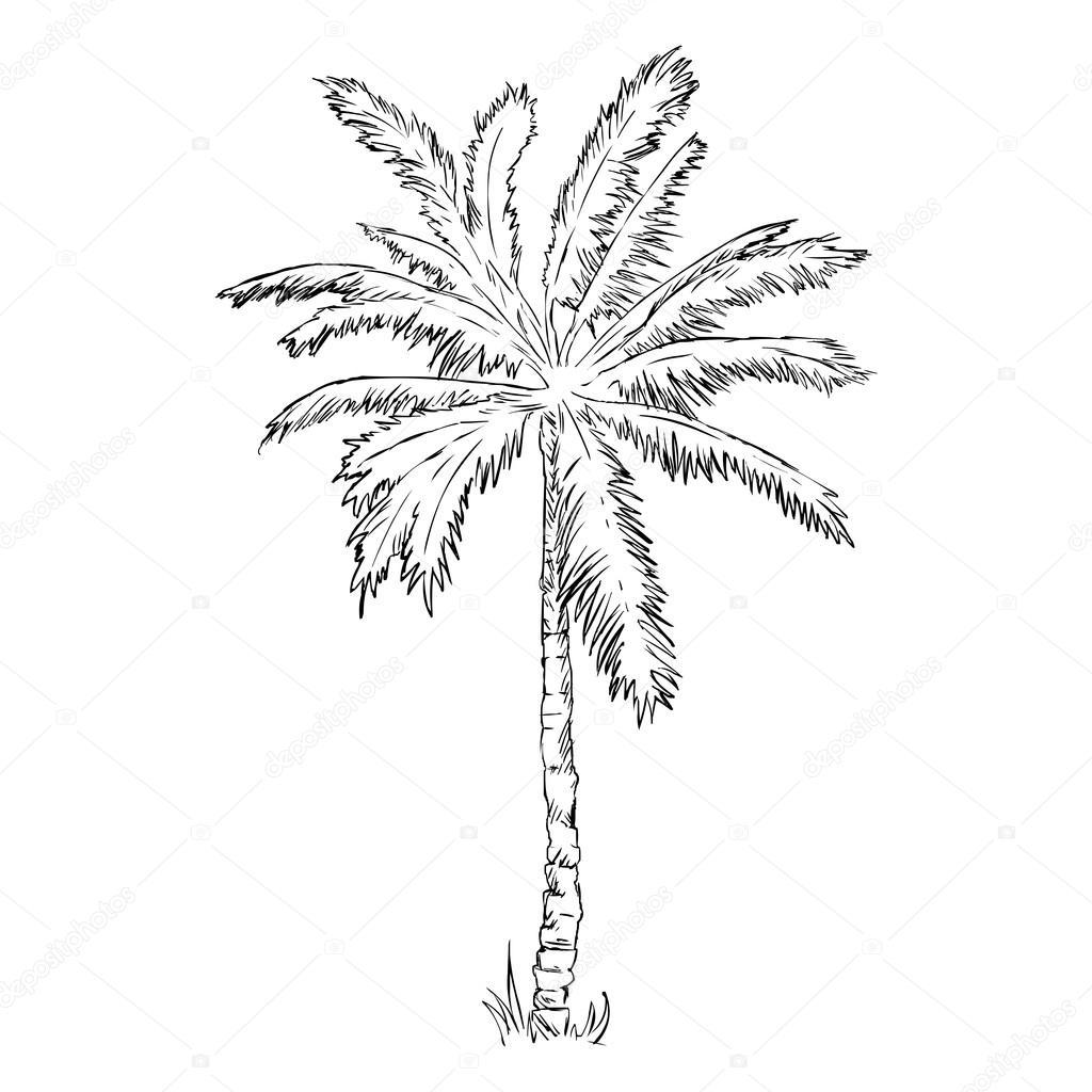 1024x1024 Sketch Palm Tree Stock Vector Nikiteev