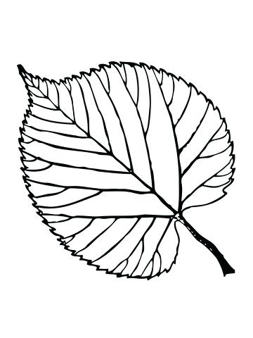 360x480 Coloring Pages Of Leaves Basswood Tree 3 Coloring Pages Palm