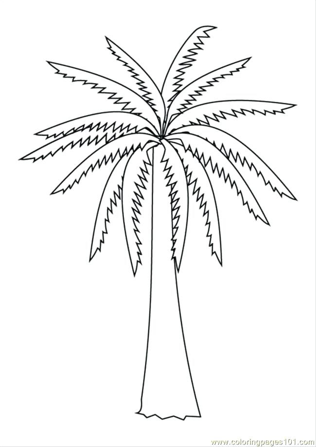 650x918 Coloring Pages Of Trees Tree Without Leaves Coloring Page Tree