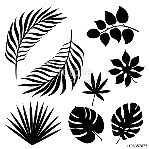 500x500 Tropical Palm Leaves Silhouette Set Stock Image And Royalty Free