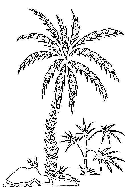 450x673 Coloring Page Beach Palm Trees 3
