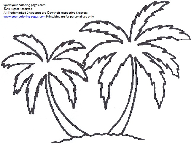 654x488 Palm Tree Coloring Pages