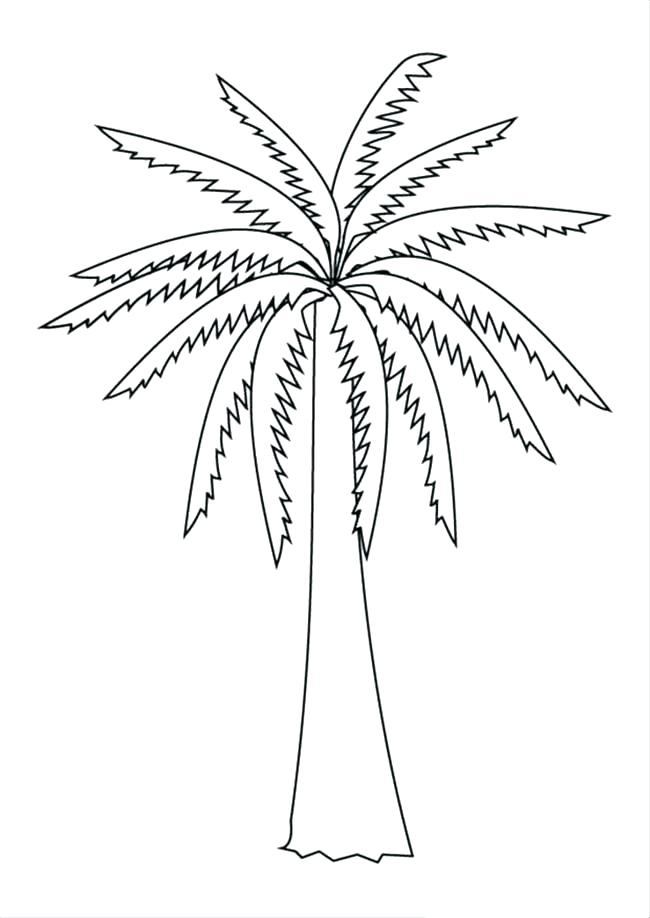 650x918 Palm Tree Coloring Pages 86 Packed With Palm Tree Coloring Pages