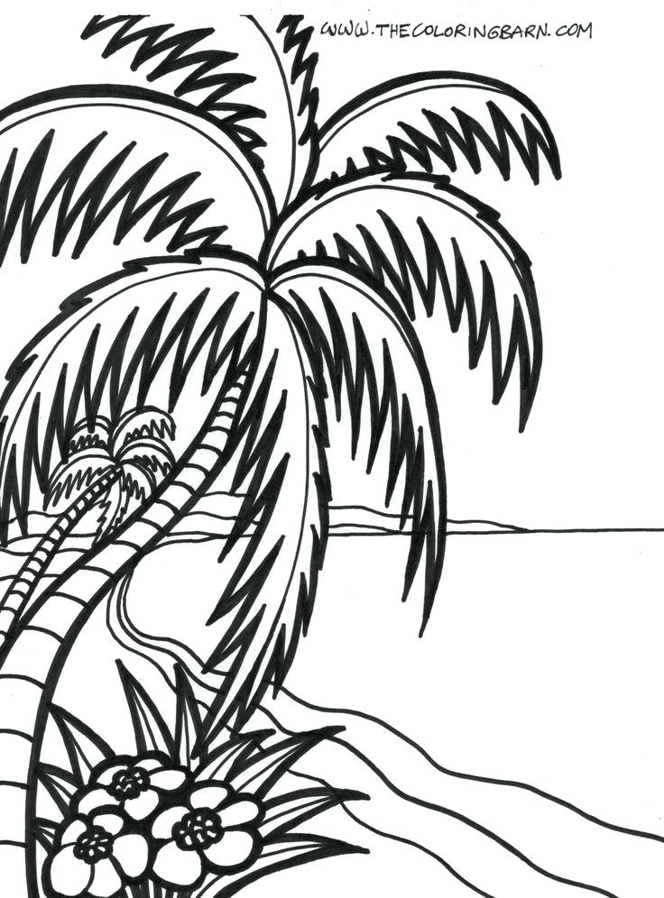 736x996 Palm Tree Coloring Pages Zoom Palm Tree Coloring Page Genesisar.co