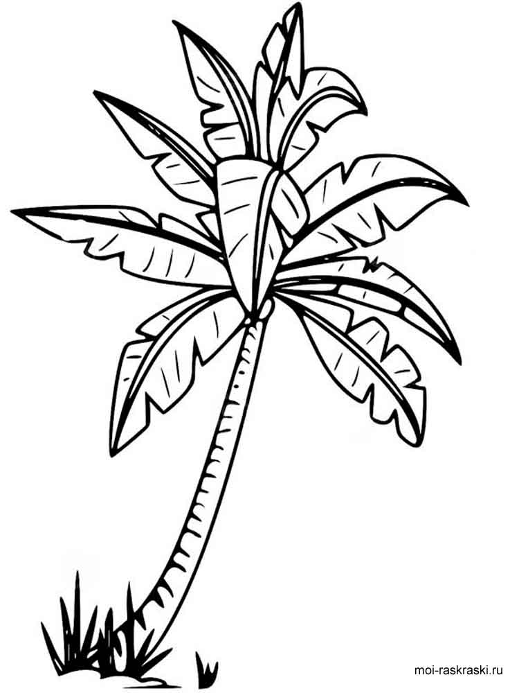 750x1000 Palm Tree Coloring Pages For Kids. Free Printable Palm Tree