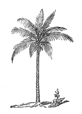 289x400 Palm Trees Drawing Tumblr