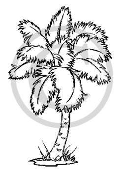 246x350 B Amp W Palm Tree Clipart