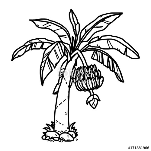 500x500 Banana Tree Cartoon Vector And Illustration, Black And White